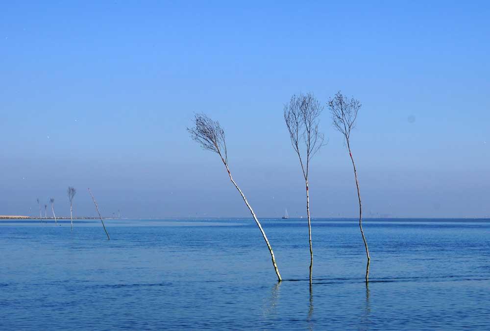 Drei Prickeln im Wattenmeer